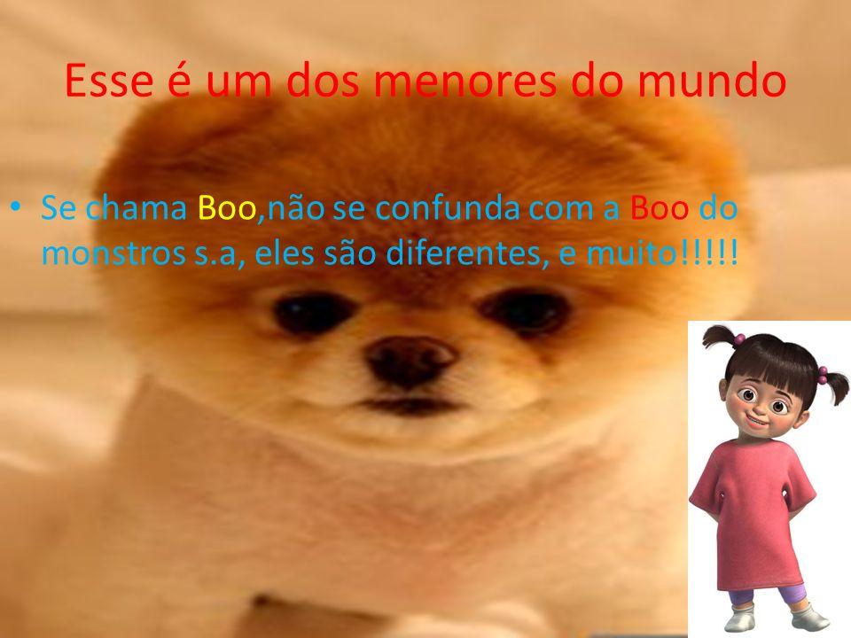 Esse é um dos menores do mundo Se chama Boo,não se confunda com a Boo do monstros s.a, eles são diferentes, e muito!!!!!
