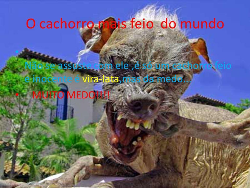 O cachorro mais feio do mundo Não se assuste com ele,é só um cachorro feio e inocente é vira-lata,mas da medo... MUITO MEDO!!!!