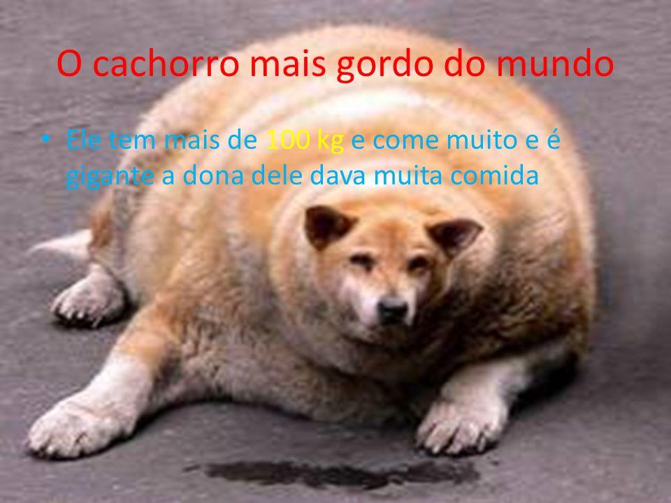 O cachorro mais caro do mundo Ele custa 2 milhões de reais,mais é um pouco feio,para custar 2 milhões tem que ser lindo