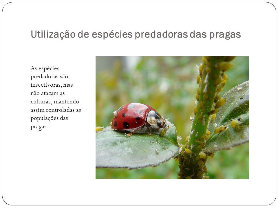Utilização de espécies predadoras das pragas As espécies predadoras são insectívoras, mas não atacam as culturas, mantendo assim controladas as populações das pragas