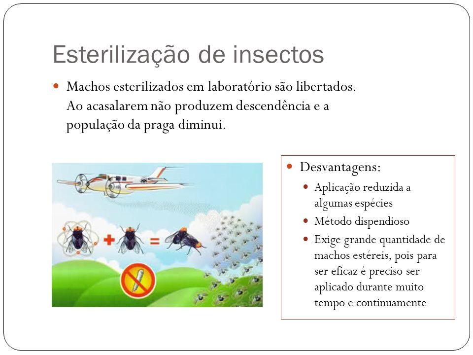 Esterilização de insectos Machos esterilizados em laboratório são libertados. Ao acasalarem não produzem descendência e a população da praga diminui.