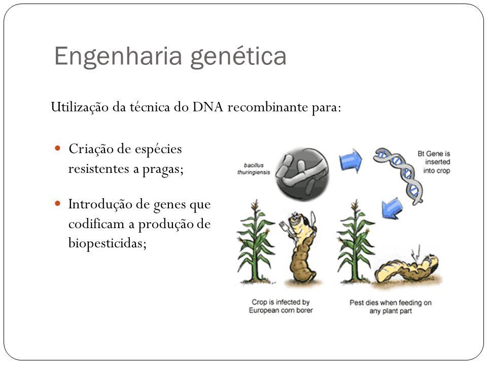 Engenharia genética Criação de espécies resistentes a pragas; Introdução de genes que codificam a produção de biopesticidas; Utilização da técnica do DNA recombinante para: