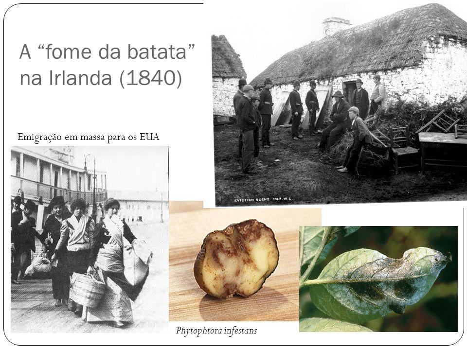 A fome da batata na Irlanda (1840) Phytophtora infestans Emigração em massa para os EUA