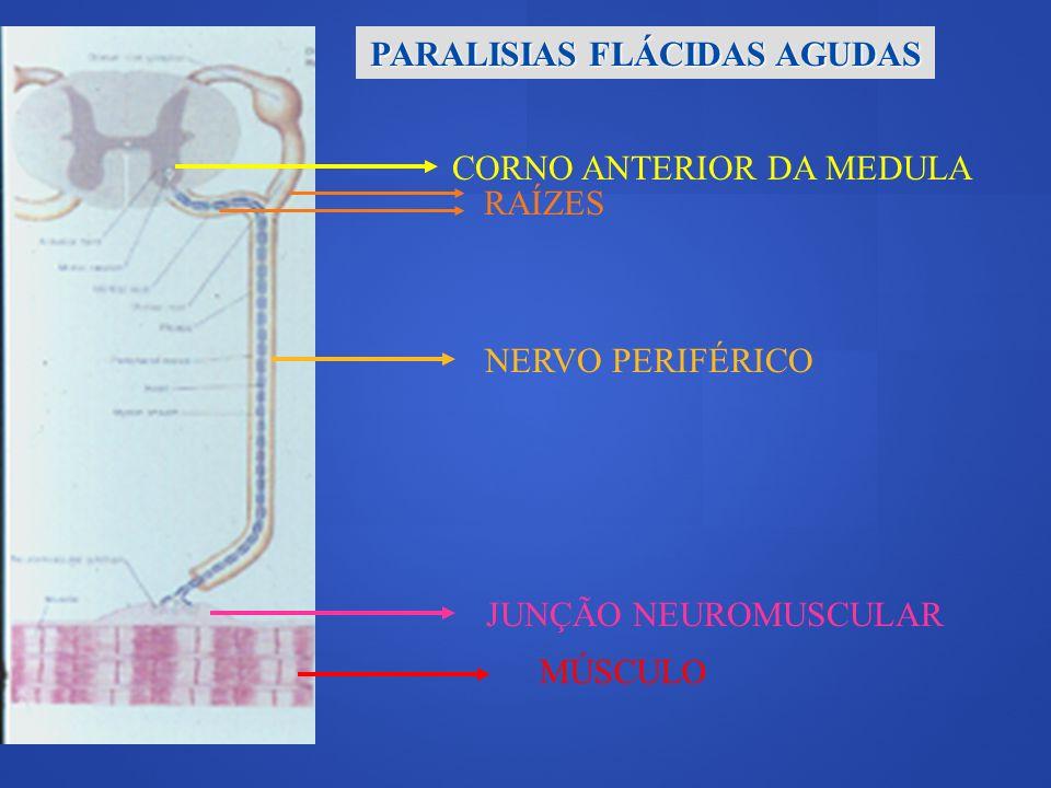 Paralisias Flácidas Agudas Corno Anterior da Medula Poliomielite aguda Raiz, Plexo, Nervo Periférico Polirradiculoneurite aguda Porfiria aguda intermitente Junção Neuromuscular Miastenia Grave Botulismo Músculo Paralisias periódicas