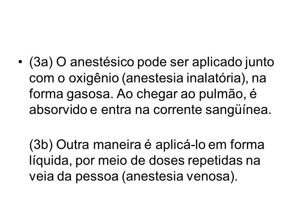 (3a) O anestésico pode ser aplicado junto com o oxigênio (anestesia inalatória), na forma gasosa. Ao chegar ao pulmão, é absorvido e entra na corrente
