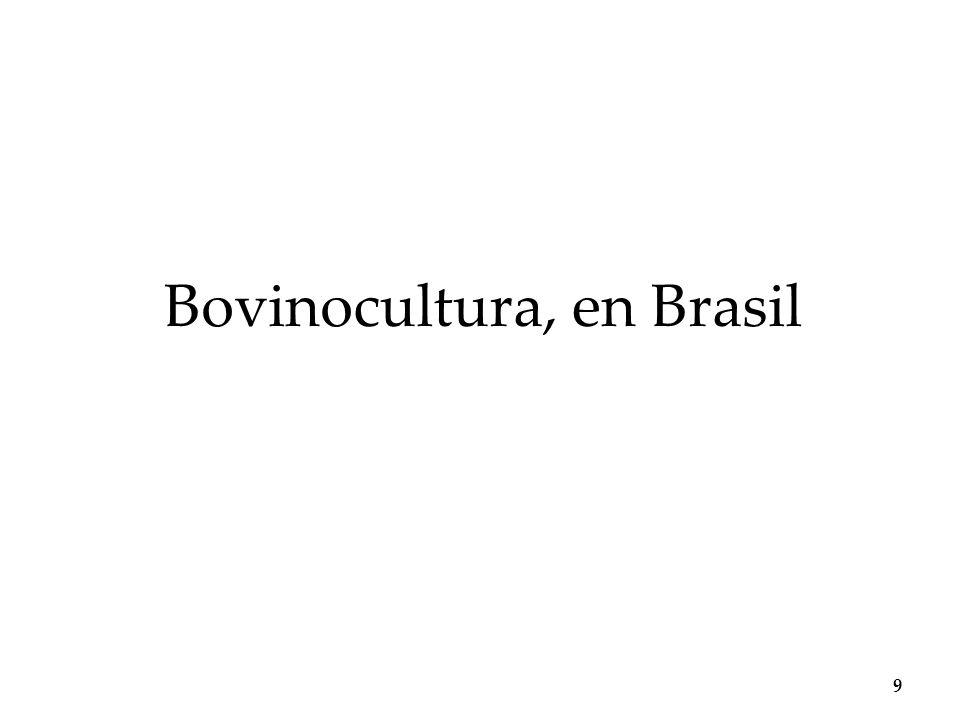 No Brasil há 210 milhões de cabeças de gado – população brasileira é de 205 milhões A bovinocultura praticada em latifúndios desagrega o meio rural e provoca migrações desordenadas campo-cidade Tendência no aumento da produtividade e exportação da carne bovina produzida no Brasil devido a mudanças estruturais e políticas públicas de apoio a atividade Aspectos preponderantes para que o preço da carne brasileira seja competitivo no mercado internacional são o baixo valor da mão de obra e terra utilizada no manejo do gado O controle da produção bovina refere-se a exigências fitossanitárias internacionais Produção bovina em áreas áridas 10