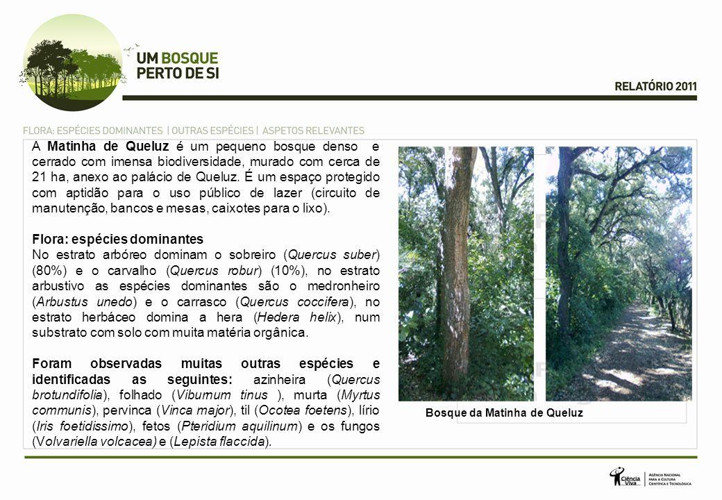 A Matinha de Queluz é um pequeno bosque denso e cerrado com imensa biodiversidade, murado com cerca de 21 ha, anexo ao palácio de Queluz.
