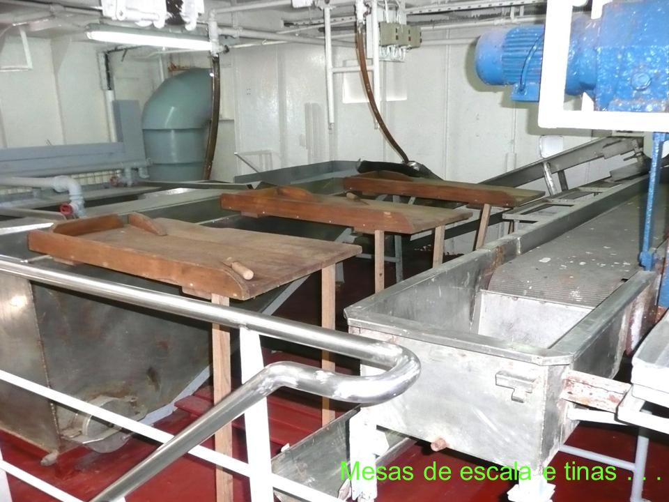Espaço onde era preparado (escalado) o bacalhau para ser salgado no porão…