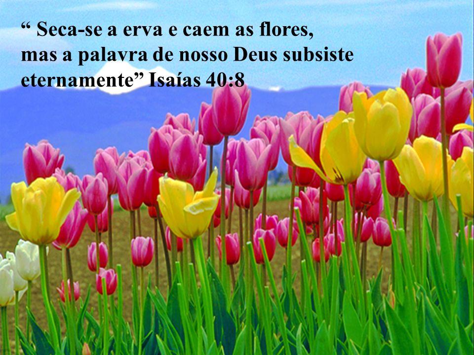 Seca-se a erva e caem as flores, mas a palavra de nosso Deus subsiste eternamente Isaías 40:8