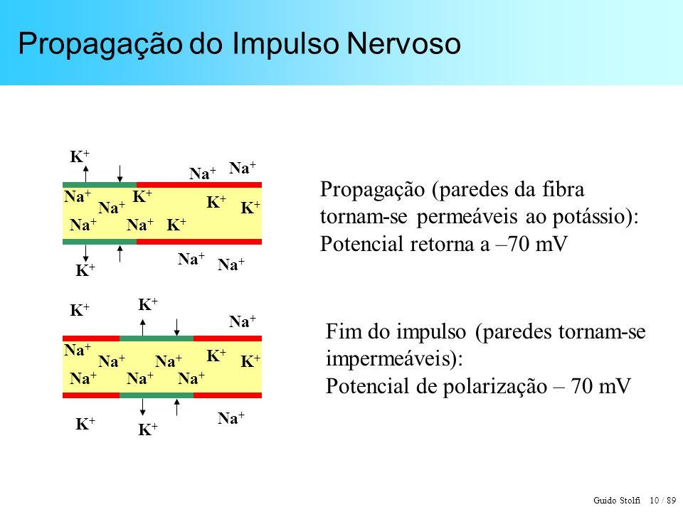 Guido Stolfi 10 / 89 Propagação do Impulso Nervoso Propagação (paredes da fibra tornam-se permeáveis ao potássio): Potencial retorna a –70 mV Fim do impulso (paredes tornam-se impermeáveis): Potencial de polarização – 70 mV Na + K+K+ K+K+ K+K+ K+K+ K+K+ K+K+ K+K+ K+K+ K+K+ K+K+ K+K+ K+K+