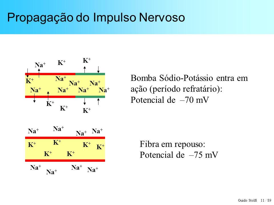 Guido Stolfi 11 / 89 Propagação do Impulso Nervoso Bomba Sódio-Potássio entra em ação (período refratário): Potencial de –70 mV Na + K+K+ K+K+ K+K+ K+K+ K+K+ K+K+ K+K+ K+K+ K+K+ K+K+ K+K+ K+K+ Fibra em repouso: Potencial de –75 mV