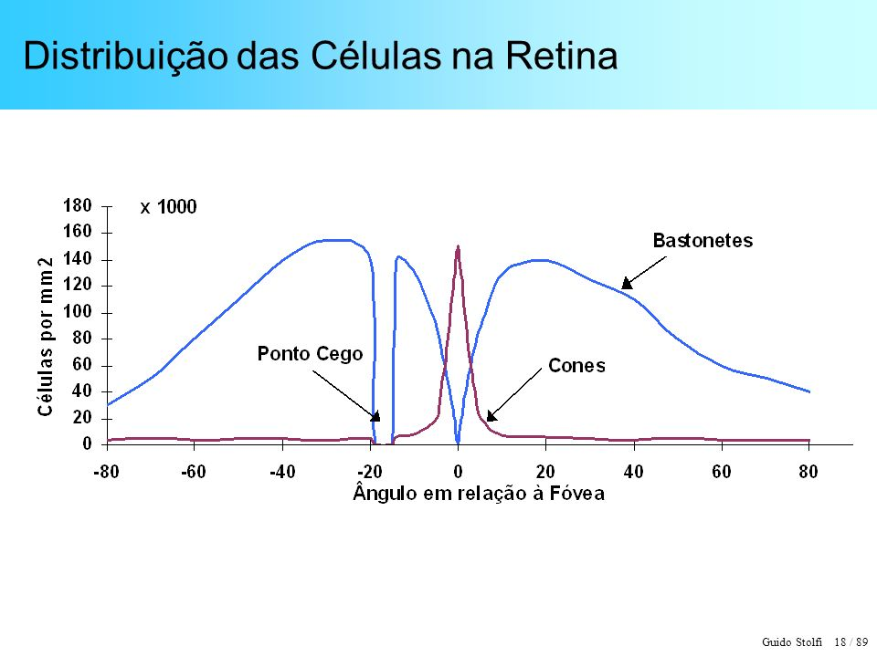 Guido Stolfi 18 / 89 Distribuição das Células na Retina