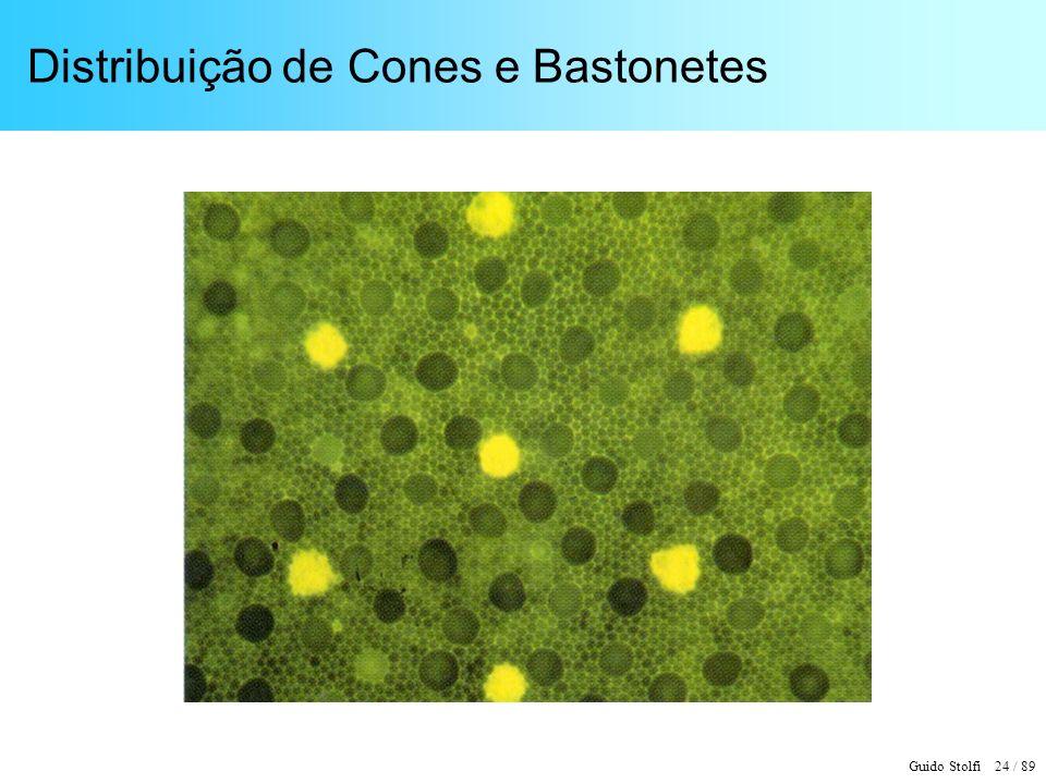 Guido Stolfi 24 / 89 Distribuição de Cones e Bastonetes