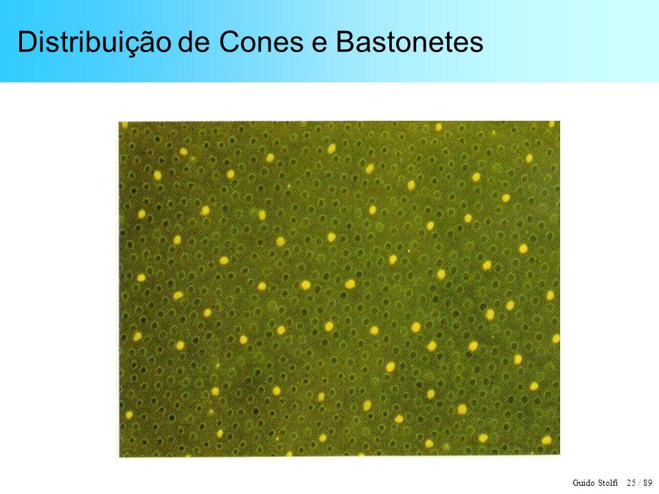 Guido Stolfi 25 / 89 Distribuição de Cones e Bastonetes