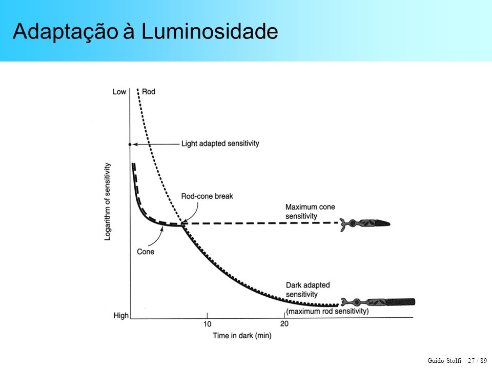Guido Stolfi 27 / 89 Adaptação à Luminosidade