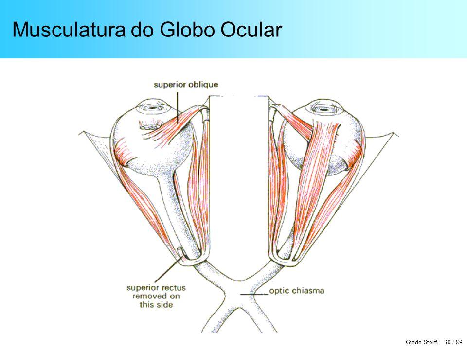 Guido Stolfi 30 / 89 Musculatura do Globo Ocular