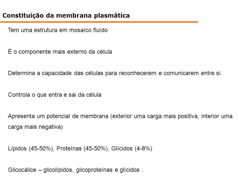 Constituição da membrana plasmática Tem uma estrutura em mosaíco fluído É o componente mais externo da célula Determina a capacidade das células para