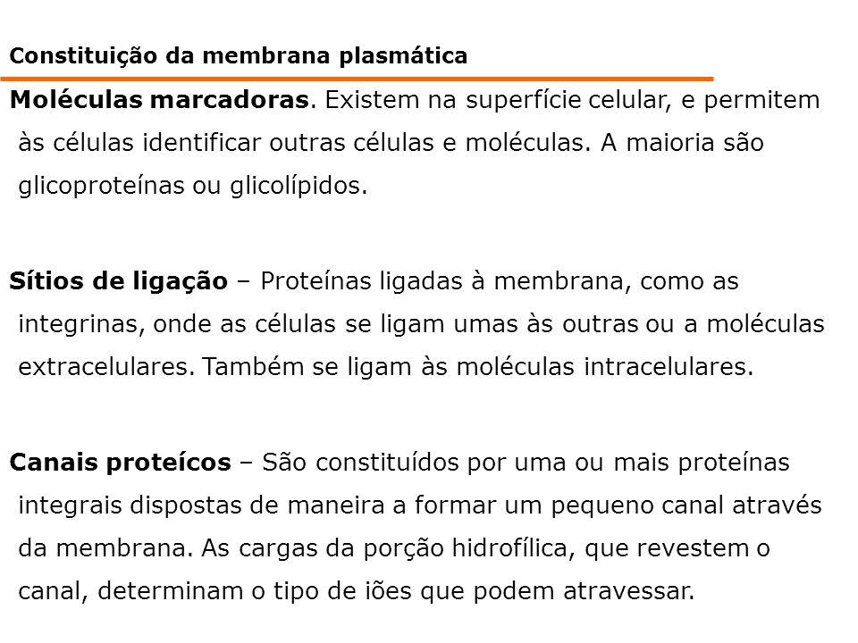 Constituição da membrana plasmática Moléculas marcadoras. Existem na superfície celular, e permitem às células identificar outras células e moléculas.