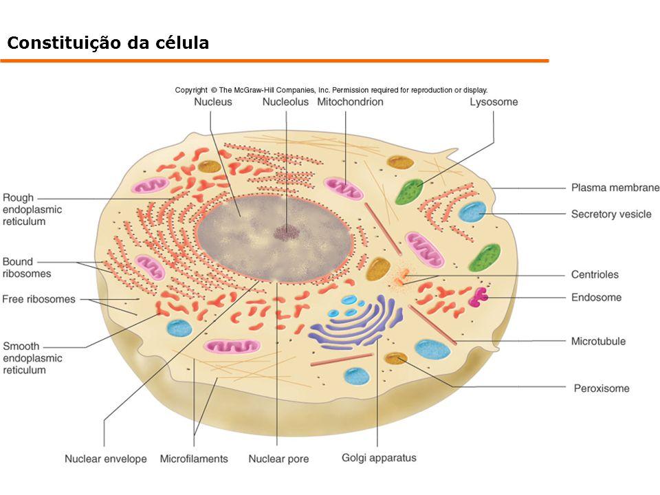 Constituição da célula