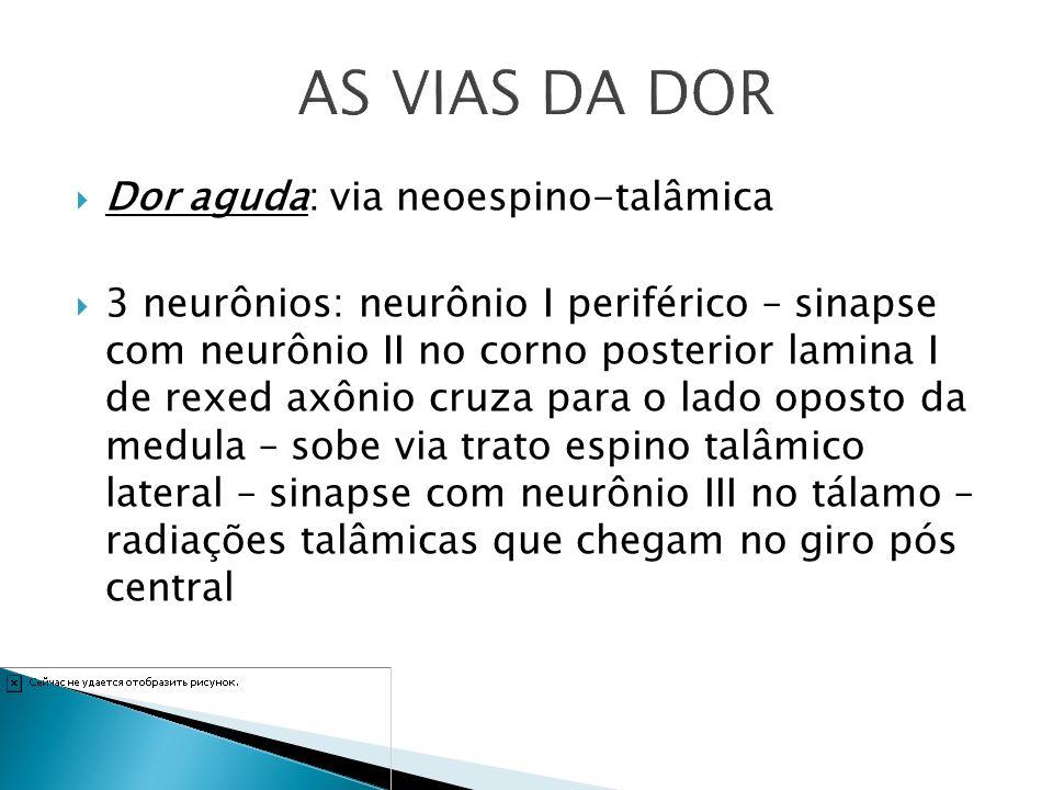 Dor aguda: via neoespino-talâmica 3 neurônios: neurônio I periférico – sinapse com neurônio II no corno posterior lamina I de rexed axônio cruza para