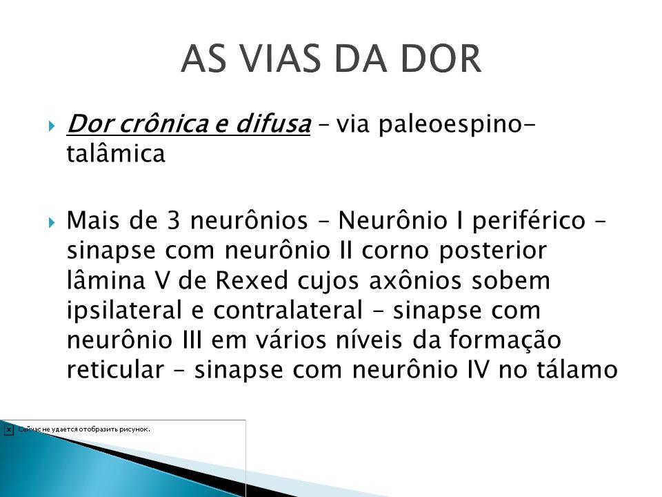 Dor crônica e difusa – via paleoespino- talâmica Mais de 3 neurônios – Neurônio I periférico – sinapse com neurônio II corno posterior lâmina V de Rex