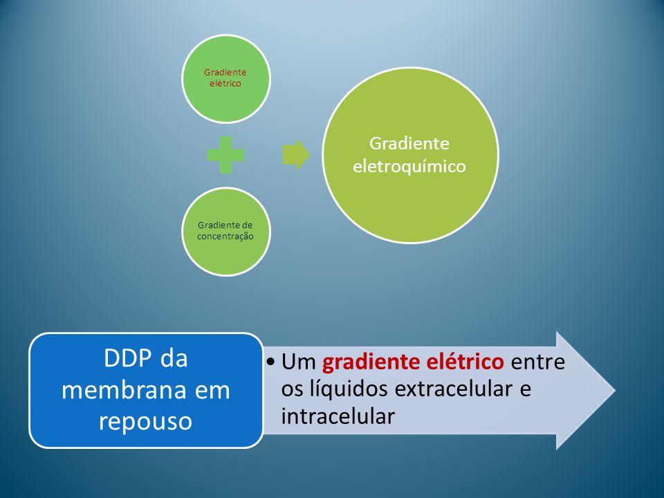 Gradiente elétrico Gradiente de concentração Gradiente eletroquímico Um gradiente elétrico entre os líquidos extracelular e intracelular DDP da membra