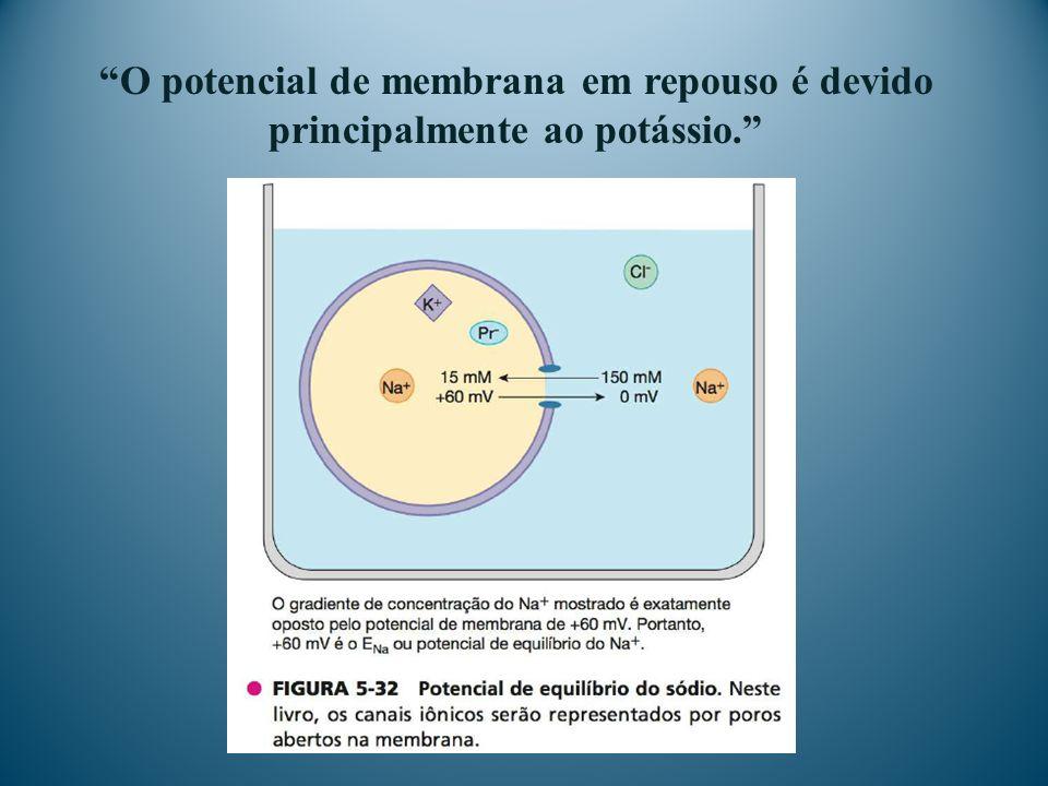 O potencial de membrana em repouso é devido principalmente ao potássio.