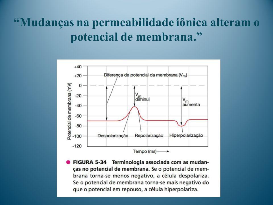 Mudanças na permeabilidade iônica alteram o potencial de membrana.