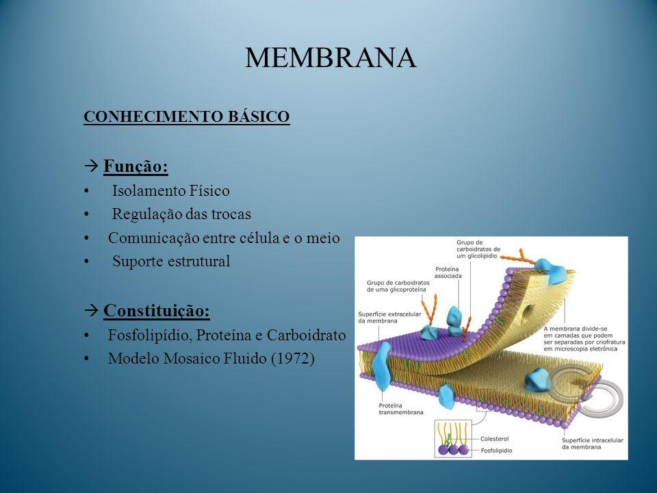 MEMBRANA CONHECIMENTO BÁSICO Função: Isolamento Físico Regulação das trocas Comunicação entre célula e o meio Suporte estrutural Constituição: Fosfoli