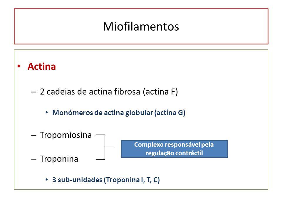 Miofilamentos Actina – 2 cadeias de actina fibrosa (actina F) Monómeros de actina globular (actina G) – Tropomiosina – Troponina 3 sub-unidades (Tropo