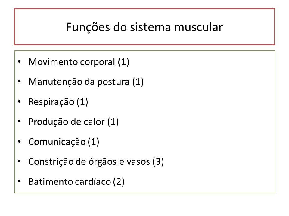 Funções do sistema muscular Movimento corporal (1) Manutenção da postura (1) Respiração (1) Produção de calor (1) Comunicação (1) Constrição de órgãos