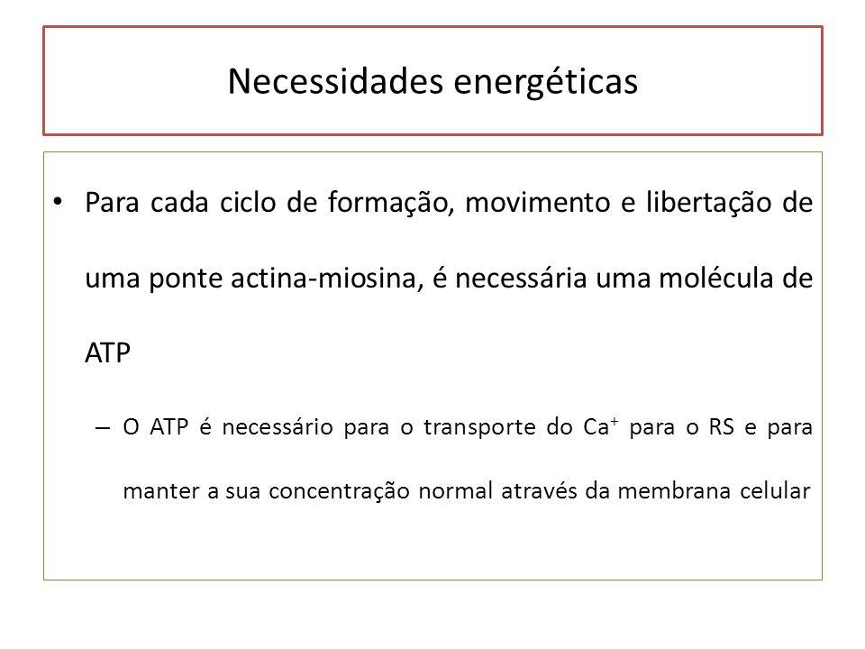 Necessidades energéticas Para cada ciclo de formação, movimento e libertação de uma ponte actina-miosina, é necessária uma molécula de ATP – O ATP é n