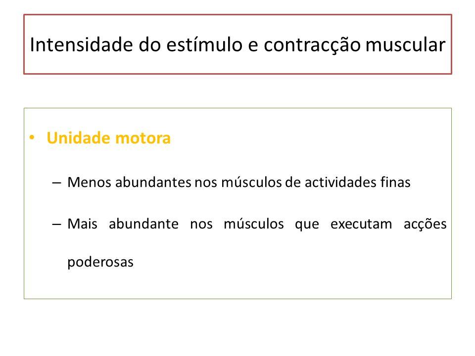 Intensidade do estímulo e contracção muscular Unidade motora – Menos abundantes nos músculos de actividades finas – Mais abundante nos músculos que ex