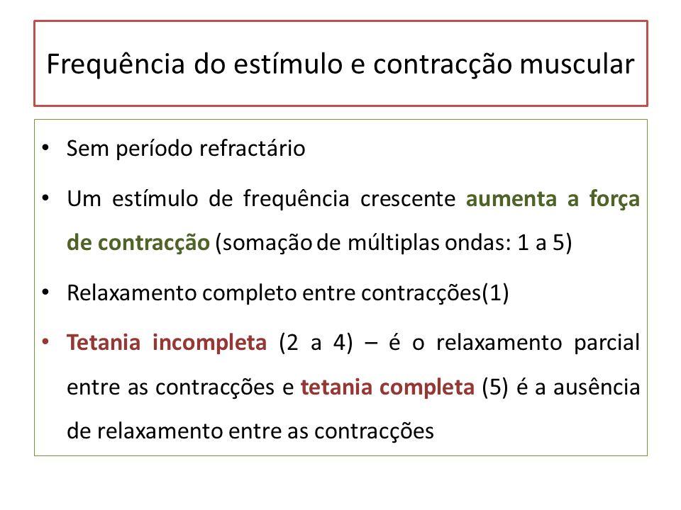 Frequência do estímulo e contracção muscular Sem período refractário Um estímulo de frequência crescente aumenta a força de contracção (somação de múl