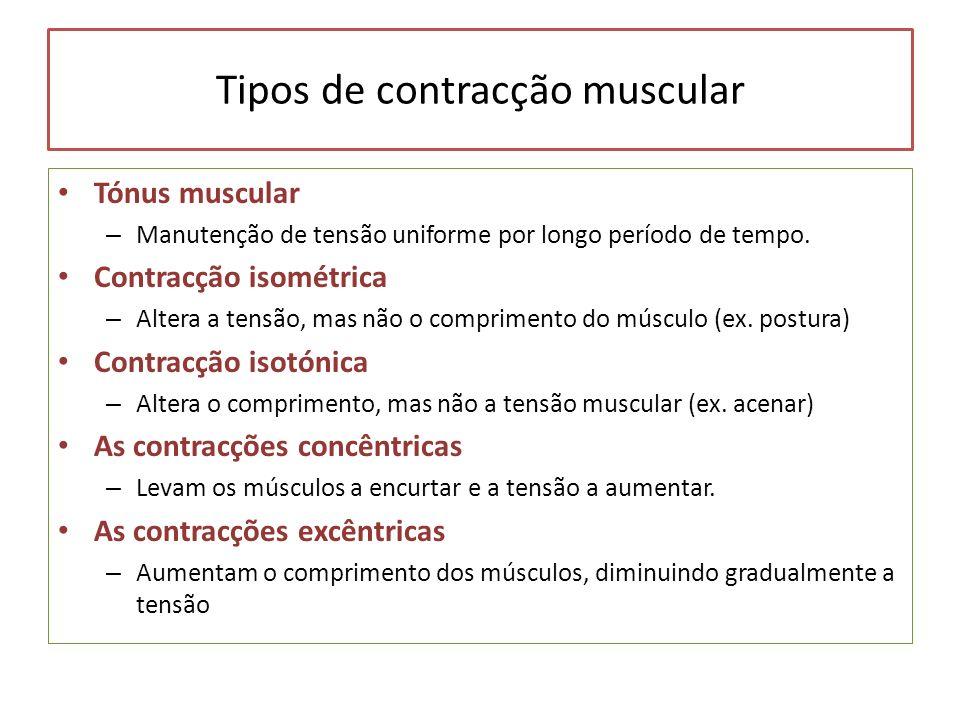 Tipos de contracção muscular Tónus muscular – Manutenção de tensão uniforme por longo período de tempo. Contracção isométrica – Altera a tensão, mas n