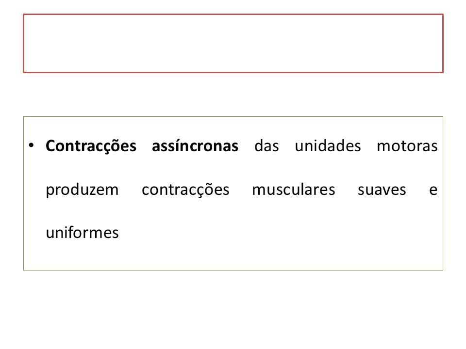 Contracções assíncronas das unidades motoras produzem contracções musculares suaves e uniformes