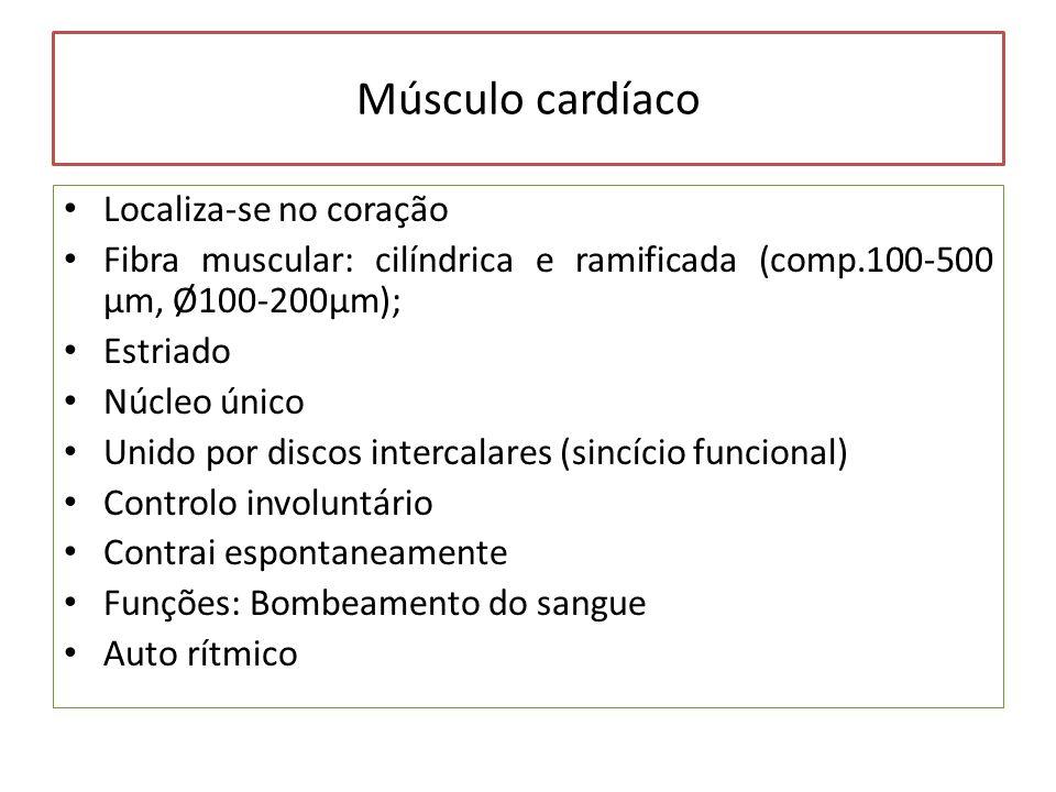 Músculo cardíaco Localiza-se no coração Fibra muscular: cilíndrica e ramificada (comp.100-500 µm, Ø100-200µm); Estriado Núcleo único Unido por discos