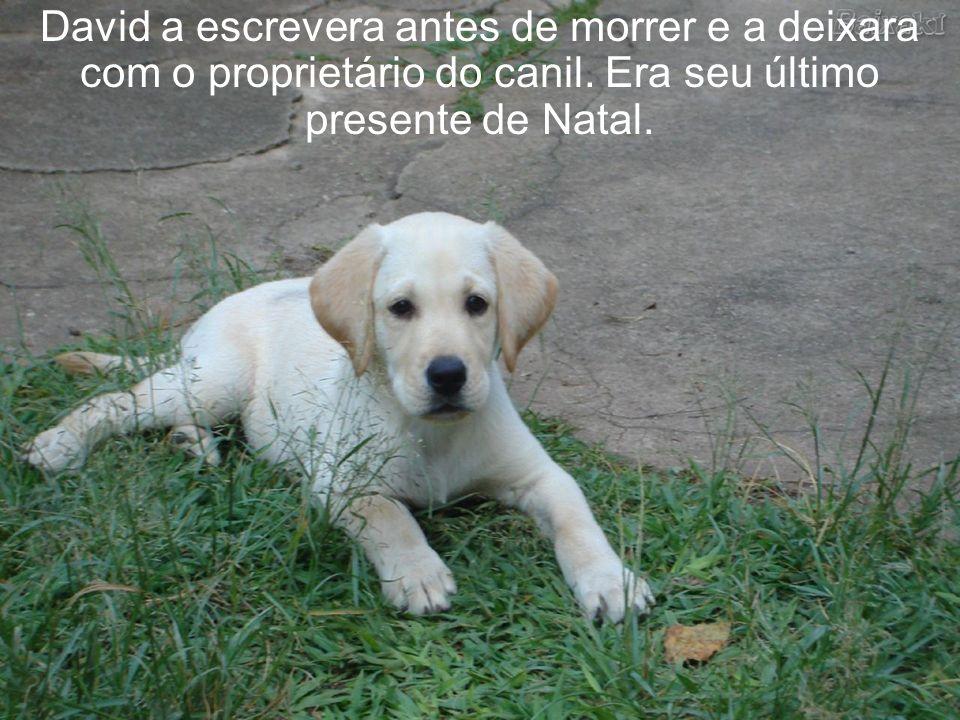 O cãozinho ficou ali, olhando-a ainda com seus olhos castanhos, à espera de um afago. A carta não era longa mas repassada de carinho.