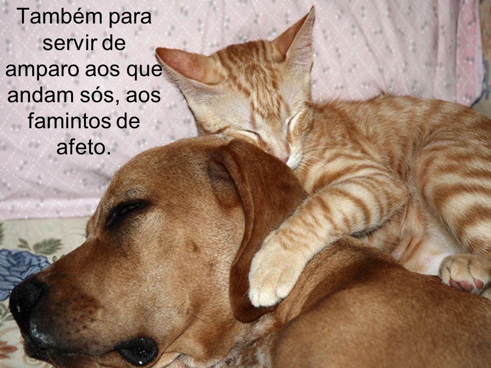 Na sua imensa sabedoria, Deus criou os animais para auxiliar o homem em suas tarefas, tanto quanto para lhe prover algumas necessidades.