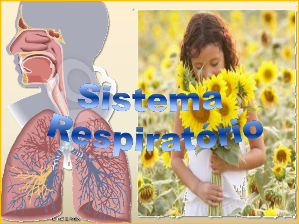 Sistema respiratório é o conjunto de órgãos responsáveis pela entrada, filtração, aquecimento, umidificação e saída de ar do nosso organismo.