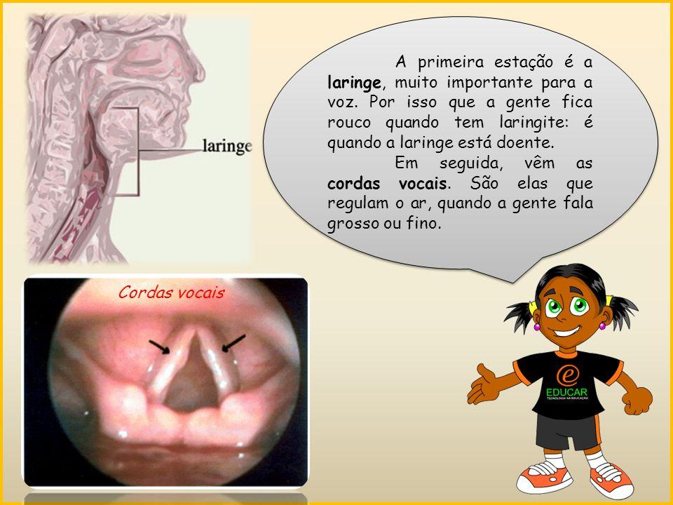 A primeira estação é a laringe, muito importante para a voz.
