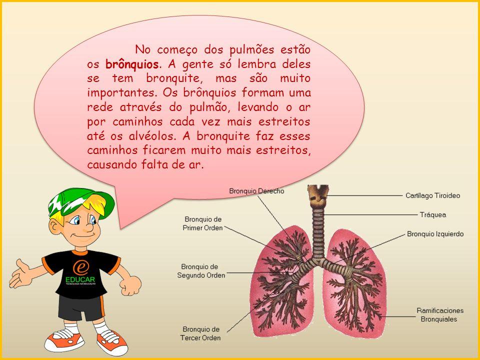 No começo dos pulmões estão os brônquios.