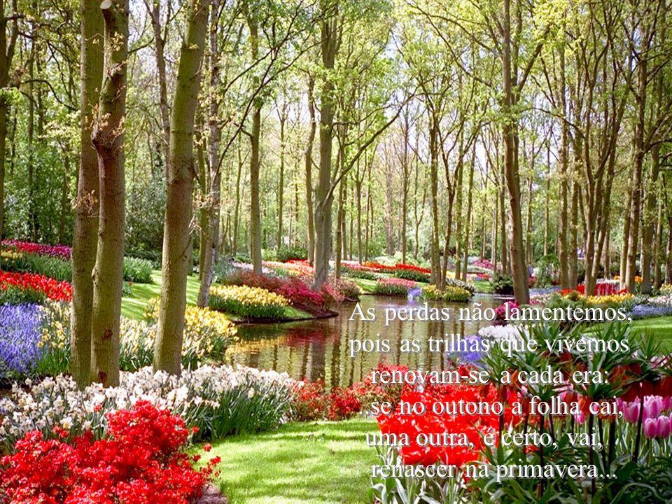 As perdas não lamentemos, pois as trilhas que vivemos renovam-se a cada era:..se no outono a folha cai, uma outra, é certo, vai, renascer na primavera...
