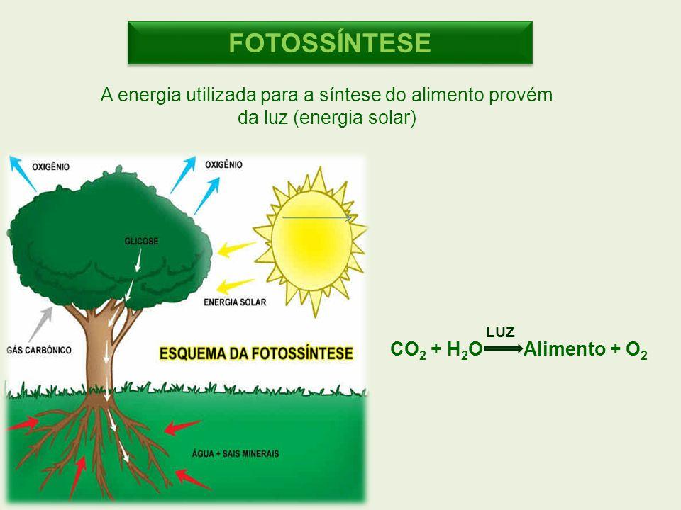 CO 2 + H 2 O Alimento + O 2 LUZ FOTOSSÍNTESE A energia utilizada para a síntese do alimento provém da luz (energia solar)