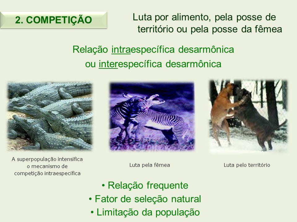 Luta por alimento, pela posse de território ou pela posse da fêmea Relação intraespecífica desarmônica ou interespecífica desarmônica Relação frequent