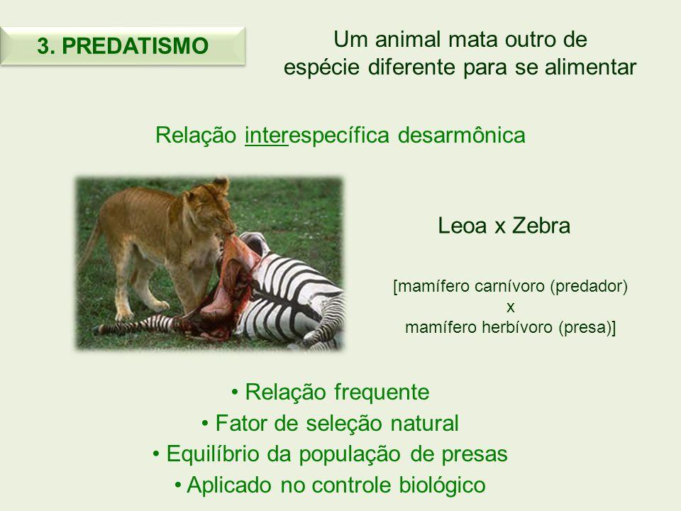 Um animal mata outro de espécie diferente para se alimentar Relação interespecífica desarmônica Relação frequente Fator de seleção natural Equilíbrio