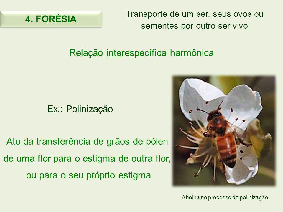 Transporte de um ser, seus ovos ou sementes por outro ser vivo Relação interespecífica harmônica Ex.: Polinização Ato da transferência de grãos de pól