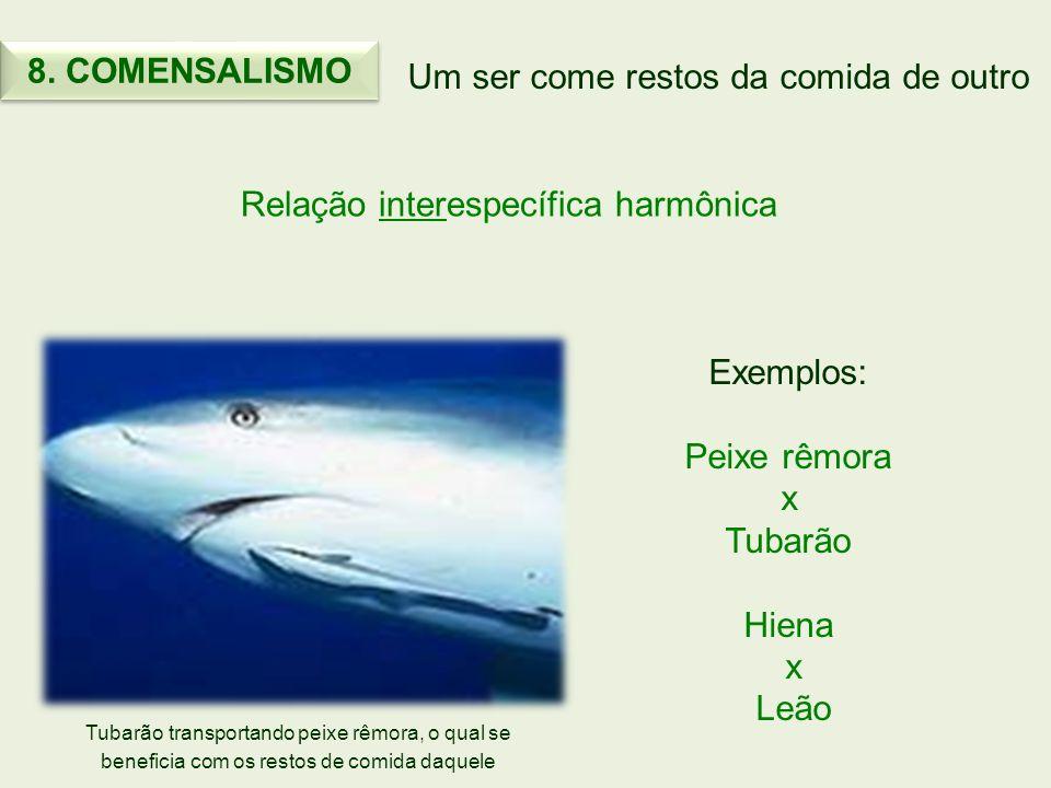 Um ser come restos da comida de outro Relação interespecífica harmônica Exemplos: Peixe rêmora x Tubarão Hiena x Leão 8. COMENSALISMO Tubarão transpor