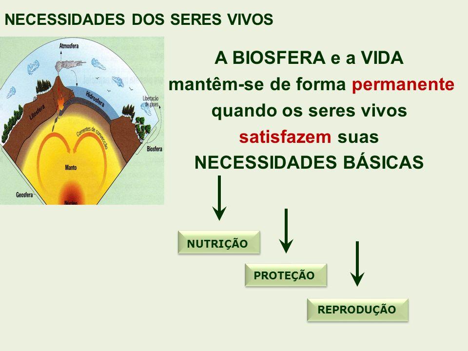 A BIOSFERA e a VIDA mantêm-se de forma permanente quando os seres vivos satisfazem suas NECESSIDADES BÁSICAS NECESSIDADES DOS SERES VIVOS NUTRIÇÃO REP