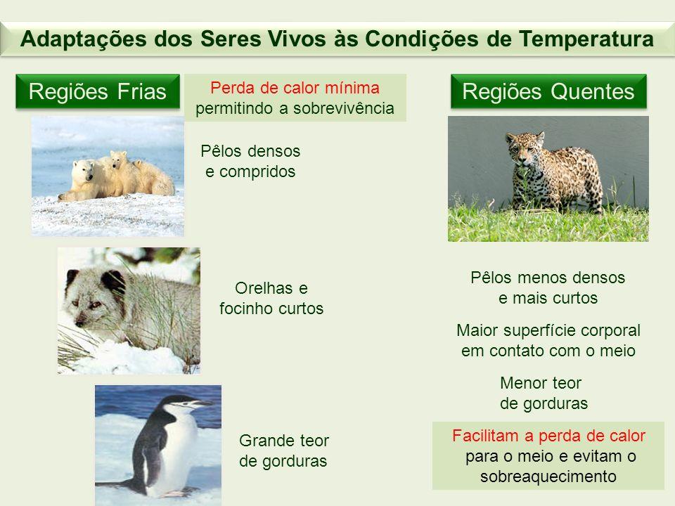 Adaptações dos Seres Vivos às Condições de Temperatura Regiões Frias Perda de calor mínima permitindo a sobrevivência Pêlos densos e compridos Orelhas